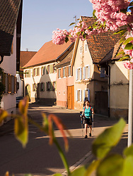 Woman on hiking tour walking through village of Oberrotweil, Baden-Wuerttemberg, Germany