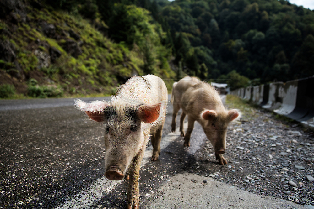 little porks, caws and horses normally graze on the street