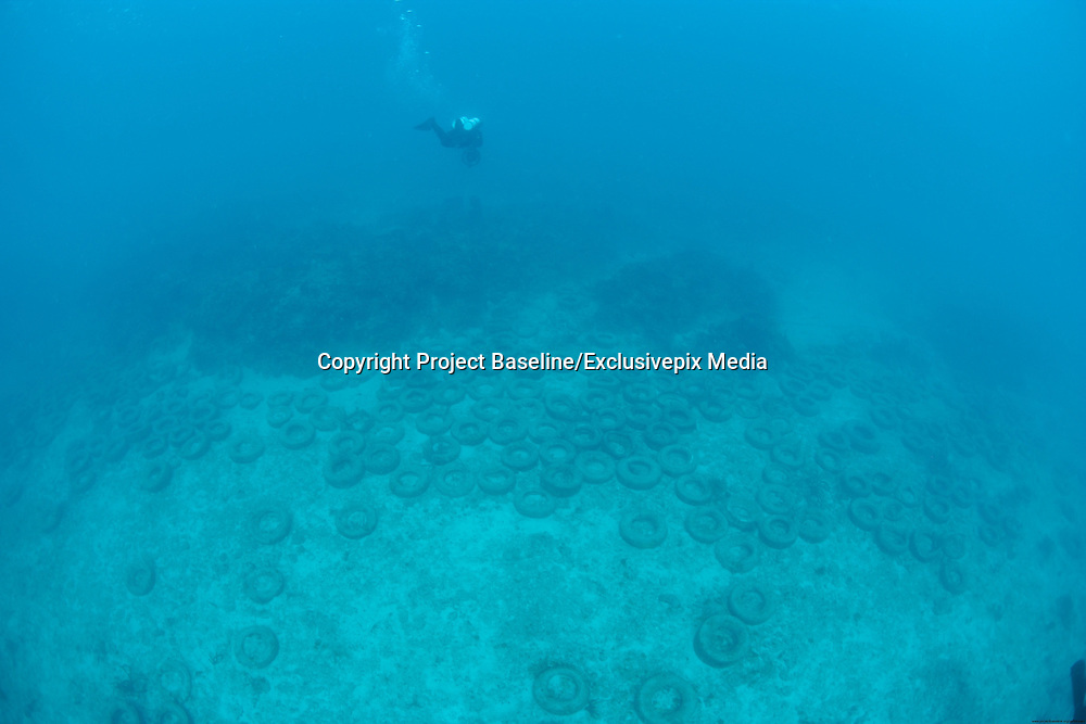 Osborne Reef: A Failed Artificial Reef Of Discarded Tires<br /> <br /> About 7,000 feet offshore of Sunrise Boulevard off the coast of Fort Lauderdale, Florida, lies an underwater wasteland of rotting tires. This is Osborne Reef, an underwater cemetery of 2 million tires that were placed there in the 1970s as a part of a failed ecological operation to create an artificial reef. Over the years, many of the tires were dislodged by tropical storms and hurricanes and caused damage to nearby existing coral reefs. Forty years later, the tires are still there causing more harm than good in the coastal Florida waters.<br /> <br /> Osborn Reef was the brainchild of a non-profit group called Broward Artificial Reef, or BARINC, composed of a group of fishermen, back in the spring of 1972. The idea was to create a reef using old tires that were piling up around the county's landfills and rural areas. This was before recycling caught on. They were convinced that corals would attach and grow on the tires and provide additional habitat for marine life. It was a well intentioned but not a particularly well thought out plan.<br /> With the support of US Army Corps of Engineers and more than 100 privately owned vessels, placement of the tires began over 36 acres of the ocean floor, 7,000 feet offshore in 65 feet of water. The Goodyear Tire and Rubber Company provided equipment for the auspicious undertaking, even supporting the project so far as to drop a gold-painted tire to christen the site. The tires were bundled together with steel clips and nylon rope and lowered onto the sea floor. However, the saline waters of the ocean quickly corroded these materials causing the tires to separate, and carried them away by ocean currents and waves. The tires, with their newfound mobility, not only destroyed any marine life that had thus far grown on the tires, it effectively prevented the growth of any new organisms. Besides, the loose tires scoured the ocean floor and damaged existing reefs