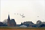Nederland, Ubbergen, 28-2-2015 Wilde grauwe ganzen in de Ooijpolder vliegen langs het kerkje van Persingen, het kleinste dorp van Nederland. Elk jaar overwinteren tienduizenden ganzen in de Gelderse Poort en de uiterwaarden langs de rivier de Waal. Foto: Flip Franssen/Hollandse Hoogte