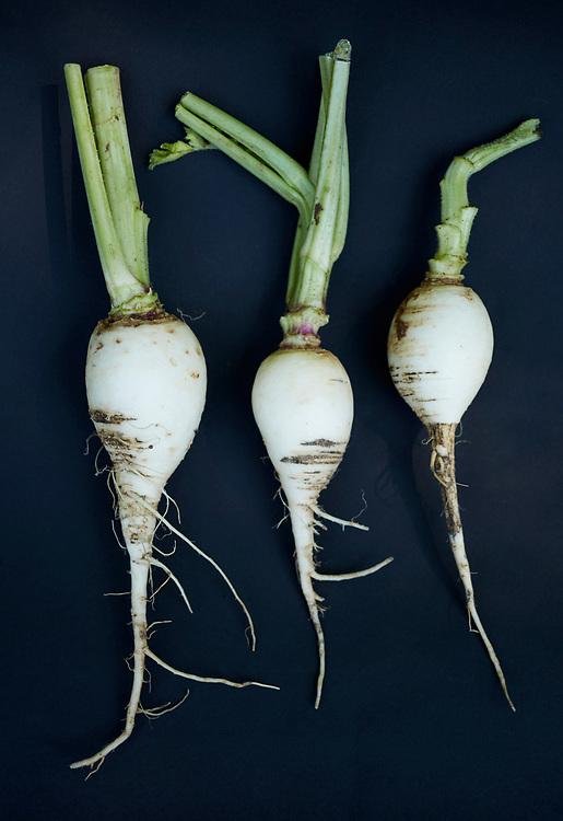 farm fresh organic small scale agriculture