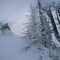Jim MacKenzie powder skiing at Grand Targhee, Idaho.