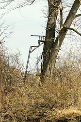 A hunters tree stand attached to a tall oak tree