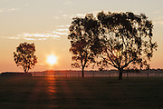 Rural sunset over a farm paddock between trees in Mingay, Victoria, Australia. <br /> <br /> Editions:- Open Edition Print / Stock Image