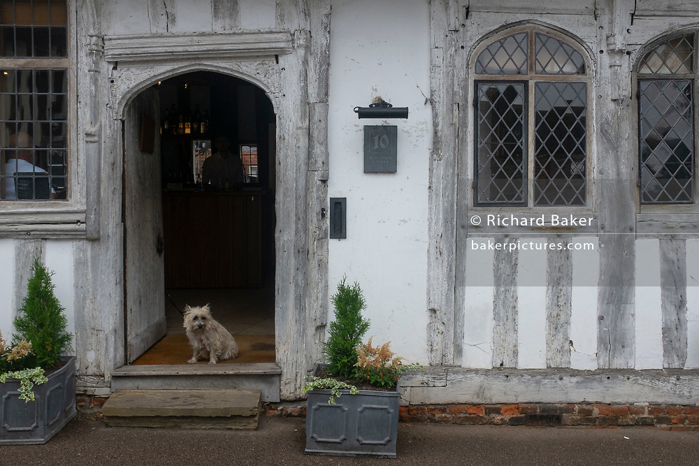 A pet dog sits on the step of a pub at 10 Lady Street, in Lavenham, Suffolk, England. By the late 15th century, the town was among the richest in the British Isles, paying more in taxation than considerably larger towns such as York and Lincoln. Several merchant families emerged, the most successful of which was the Spring family.  The wool trade was already present by the 13th century, steadily expanding as demand grew. By the 1470s Suffolk produced more cloth than any other county.