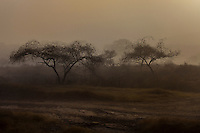 Trees in fog on an early morning in Ranthambore National Park