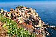 Photo of the fishing port of Manarola, Cinque Terre National Park, Liguria, Italy .<br /> <br /> Visit our ITALY HISTORIC PLACES PHOTO COLLECTION for more   photos of Italy to download or buy as prints https://funkystock.photoshelter.com/gallery-collection/2b-Pictures-Images-of-Italy-Photos-of-Italian-Historic-Landmark-Sites/C0000qxA2zGFjd_k
