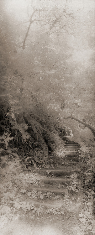 Stairway, Fern Creek, Prairie Creek Redwoods State Park, Redwoods National Park, California