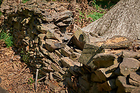 Remains of the downed Oak tree and damaged rock wall (east side of driveway). Image taken with a Leica SL2 camera and Sigma 70 mm f/2.8 macro lens