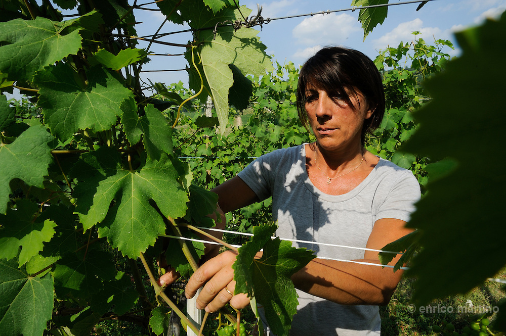 Langhe, Monforte Loredana Addari  barolo wine producer (Ruggeri-Corsini company) working on the family owned vineyard.