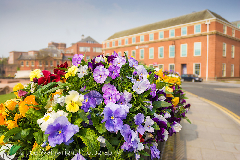 Colourful pansies brighten the railings separating the amphitheatre from Vicars Lane, Chester.