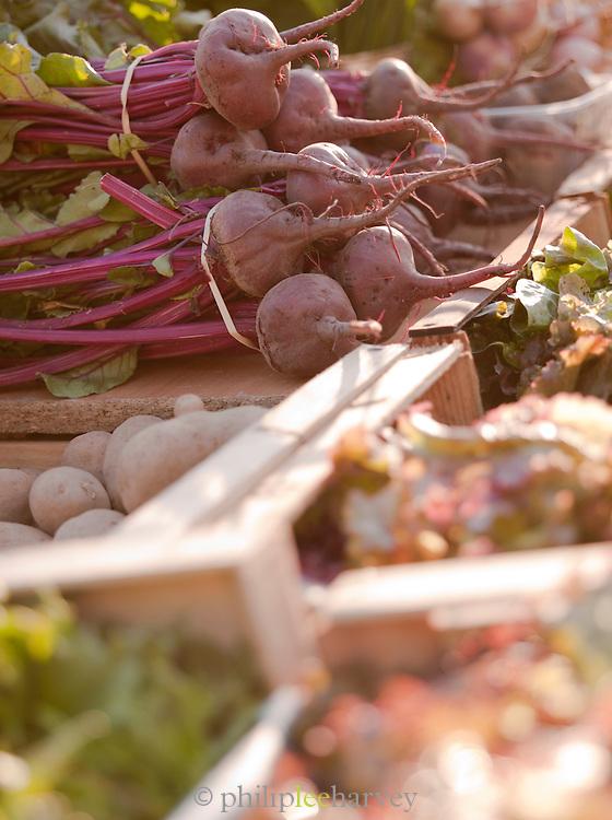 Fresh vegetables in a market in Valence, Drôme region, France