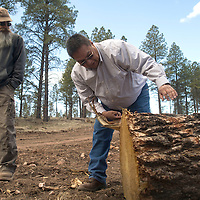 Alvin Whitehair, Mount Taylor District Ranger, explains how he studies tree rings to learn about the history of the forest during a tour of the logging areas in the Zuni Mountains, Friday, along with Don Olson, Sale Administrator for Cibola National Forest.