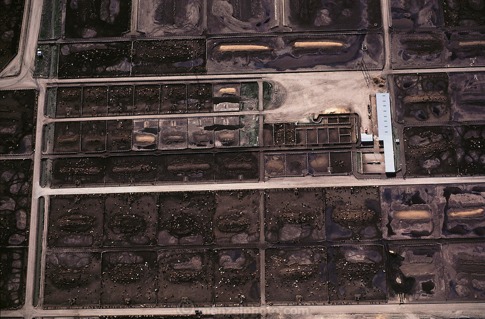 Aerial photograph of a beef cattle feedlot using potato waste from a  French fry factory supplying McDonald's using Simplot potatoes, Idaho.