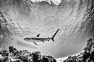 On Assigment: Bahamas Underwater Photo Week 2014