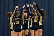 Essex celebrates a point during the girls volleyball game between the Rice Green Knights and the Essex Hornets at Essex High School on Thursday afternoon September 20, 2018 in Essex. (BRIAN JENKINS/for the FRESS PRESS)