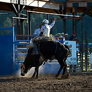 Quinn Greenough on Red Eye Rodeo Bull Rocky at the Darby MT Elite Proffesionals Bull Riding Event July 7th 2017.  Photo by Josh Homer/Burning Ember Photography.  Photo credit must be given on all uses.