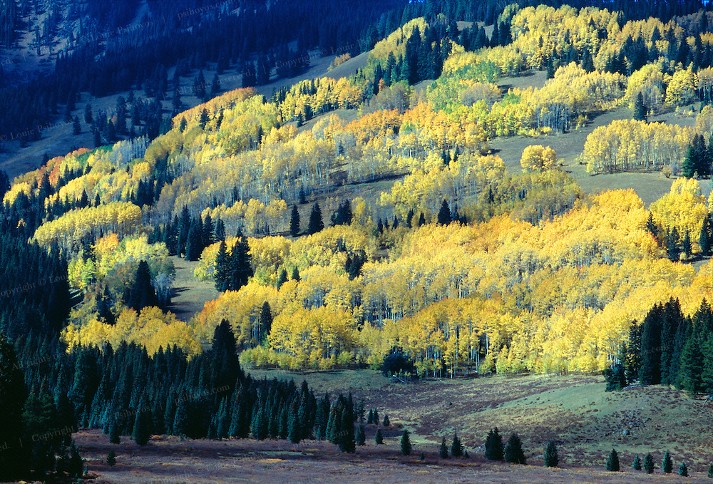 Fall colors on a road north of the town of Aspen, Colorado