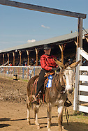 Cowgirl at Montana Mule Days in Drummond Montana on donkey (Equus asinus), ass, Proudly showing blue ribbon won, <br /> MODEL RELEASED