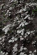 Santana do Riacho_MG, Brasil...Detalhe de plantas em Santana do Riacho, Minas Gerais...A plants detail in Santana do Riacho, Minas Gerais...Foto: LEO DRUMOND / NITRO