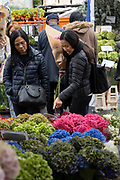 Two Asian ladies looking at hydrangea flowers at Columbia Road Flower Market on the 6th October 2019 in London in the United Kingdom. Columbia Road Flower Market is a street market in Bethnal Green in Hackney, London. The market is open on Sundays only.