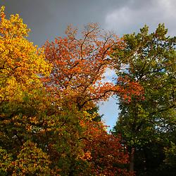 Parque (Paisagem) fotografado em Nuremberg, na Alemanha. Registro feito em 2009.<br /> ⠀<br /> <br /> <br /> ENGLISH: Park photographed Nurnberg, Germany. Picture made in 2009.