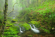 Dickson Creek at Dickson Falls <br /> Fundy National Park<br /> New Brunswick<br /> Canada