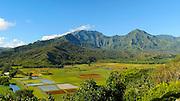 pan, Hanalei Valley Lookout, Taro fields, Kauai, Hawaii
