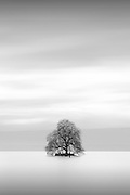 This little Tree island stands in the middle of the leman lake.
