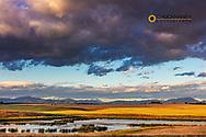 Wetlands provide critical bird habitat in the Flathead Valley, Montana, USA