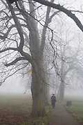 Walking figure in a London park on an early misty morning.