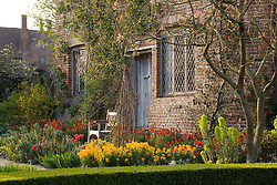 Wallflowers and tulips in the Cottage Garden at Sissinghurst Castle Garden in spring.