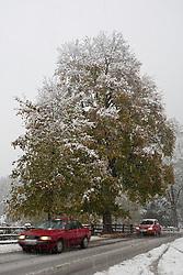 25.10.2010, Kaprun, AUT, Wintereinbruch Salzburger Land, im Bild Ahorn Baum in herbstlichen Farben in Schnee geüllt, Autos fahren auf der Schneebedeckten Strasse, EXPA Pictures © 2010, PhotoCredit: EXPA/ J. Feichter