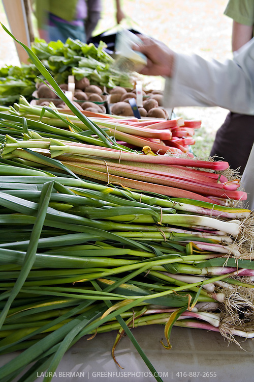 Spring garlic and rhubarb at Toronto's Withrow Park Farmers' Market