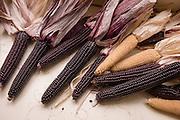 Peace, No War purple flour corn