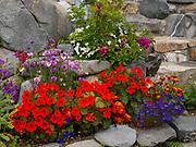 Trish Lee's garden east of Caribou Creek, Glacier View, Alaska.