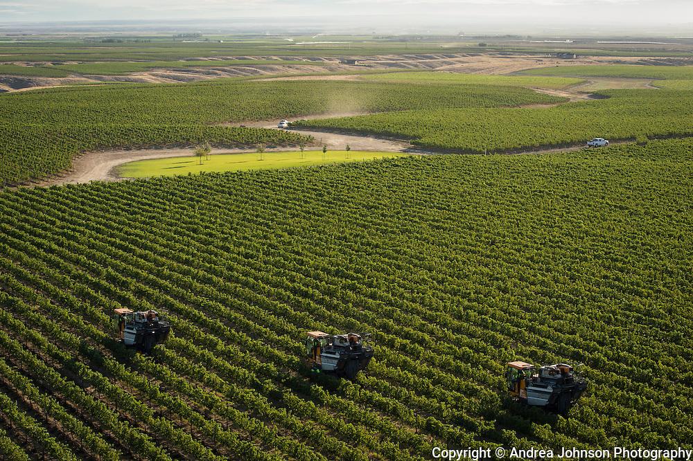 Aerial view over Mercer Estate Vineyards, Horse Heaven Hills AVA, Washinggton