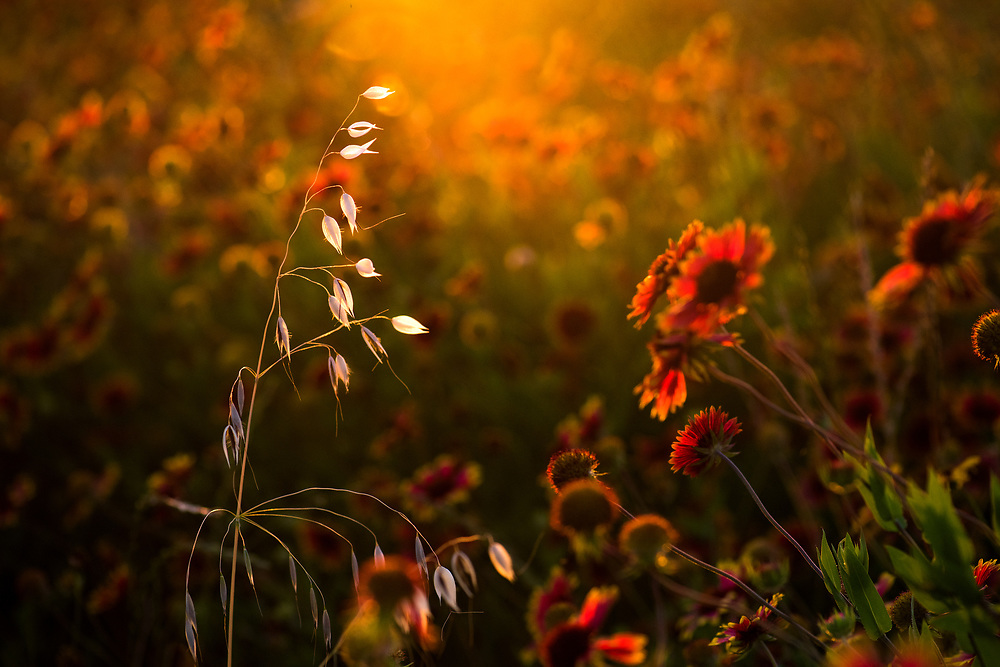Hill Country spring mix in first light of dawn, Johnson City, Texas