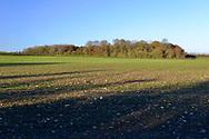 Stoke Wood, Oxfordshire.