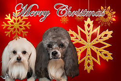 I think this may be the one we end up going with. A bit of snowflake ornament fun. Paco on the left, Bear to the right.