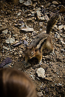This friendly liitle furrball was very happy to see us while we went for a walk at Moraine Lake on the weekend.  It came right up to me for a close look, then proceeded to roll in the dirt at my feet...