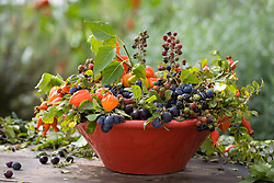 Arrangement of foraged fruit and berries