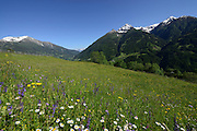 Mountain pastures. Matrei in East Tyrol, Austria. | Almwiesen, Matrei in Osttirol, Österreich.