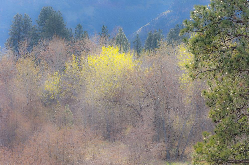 Riparian habitat, northeastern  Oregon, USA