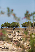 Scenic landscape with old ruins against clear sky, Paphos Archaeological Park, Paphos, Cyprus