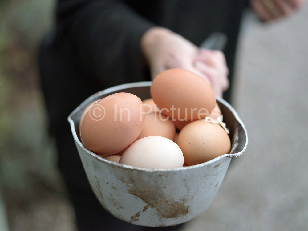 The owner of a bed and breakfast collecting fresh hens eggs in the village of Field Broughton in Cumbria on 19 October 2018