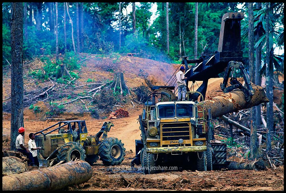 Logging, East Kalimantan, Indonesia.