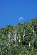 This was shot from the bottom of Lefty's at Powder Mountain, in Eden, UT. It was an amazing moon still visible at mid morning.