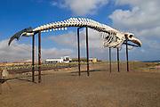Whale skeleton display at Las Salinas del Carmen, Fuerteventura, Canary Islands, Spain
