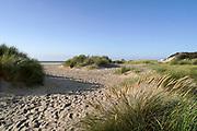 Nederland, Cadzand, 10-9-2019, Noordzeestrand bij het natuurgebied, nationaal park, het Zwin . Bij vloed stroomt het vol en bij eb weer leeg met mooie kreken in het zand . Duindoorgang met helmgras .Foto: Flip Franssen